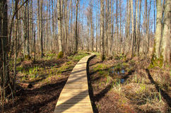 Ροή broadwalk στο εθνικό πάρκο Kemeri στοκ φωτογραφία με δικαίωμα ελεύθερης χρήσης