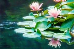 Ροδάκινο Waterlilies στοκ φωτογραφία με δικαίωμα ελεύθερης χρήσης
