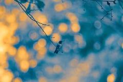 Ροδοκόκκινο βουίζοντας πουλί Throated σε ένα σκοτεινό κλίμα στοκ φωτογραφία με δικαίωμα ελεύθερης χρήσης