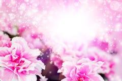 ροζ αζαλεών στοκ εικόνες με δικαίωμα ελεύθερης χρήσης