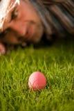 ροζ αυγών Στοκ Φωτογραφία