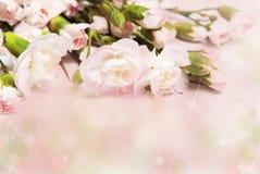 ροζ γαρίφαλων κλάδων Στοκ εικόνα με δικαίωμα ελεύθερης χρήσης