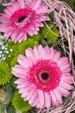 ροζ δύο gerbera στοκ φωτογραφία