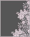 Ροζ κάρτα δαντελλών τριαντάφυλλων Στοκ Εικόνες