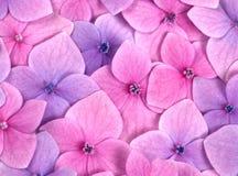 ροζ λουλουδιών ανασκόπ& Στοκ Φωτογραφίες