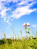 ροζ λουλουδιών πεδίων Στοκ φωτογραφία με δικαίωμα ελεύθερης χρήσης