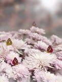 ροζ λουλουδιών πεταλούδων Στοκ φωτογραφία με δικαίωμα ελεύθερης χρήσης