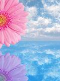 ροζ λουλουδιών Στοκ εικόνες με δικαίωμα ελεύθερης χρήσης