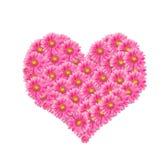 ροζ λουλουδιών Στοκ Εικόνες