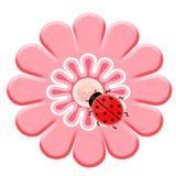 ροζ λουλουδιών ladybug Στοκ Εικόνα