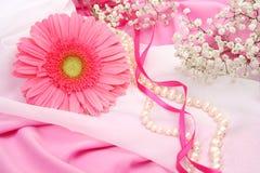 ροζ μαργαριταριών λουλ&omic Στοκ Εικόνα
