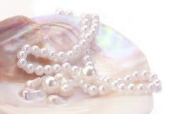 ροζ μαργαριταριών Στοκ Φωτογραφία
