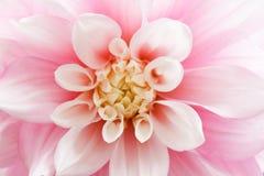 ροζ νταλιών στοκ φωτογραφίες με δικαίωμα ελεύθερης χρήσης