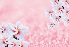 ροζ λουλουδιών ανασκόπ& Στοκ Φωτογραφία