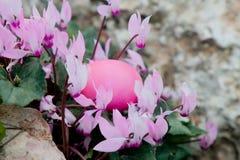 ροζ Πάσχας Στοκ φωτογραφία με δικαίωμα ελεύθερης χρήσης