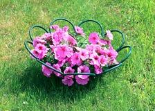 ροζ πετουνιών λουλου&delt Στοκ φωτογραφία με δικαίωμα ελεύθερης χρήσης