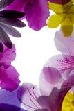 ροζ πλαισίων λουλουδ&iota Στοκ φωτογραφία με δικαίωμα ελεύθερης χρήσης
