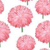 ροζ προτύπων λουλουδιώ&nu Υπόβαθρο άνοιξη με το πολύβλαστο χρυσάνθεμο Ζωηρόχρωμος οφθαλμός αστέρων Στοκ φωτογραφίες με δικαίωμα ελεύθερης χρήσης