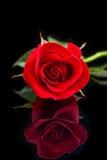 Ροζ στενός επάνω Στοκ Εικόνα
