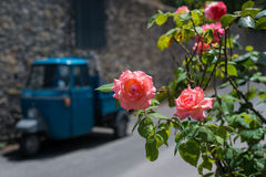 Ροζ τριαντάφυλλα ενάντια στην οδό πόλεων στην ηλιόλουστη θερινή ημέρα Στοκ Εικόνες