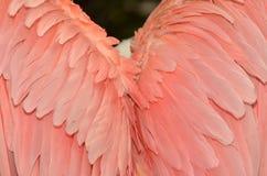 ροζ φτερών Στοκ εικόνες με δικαίωμα ελεύθερης χρήσης
