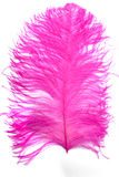 ροζ φτερών Στοκ φωτογραφίες με δικαίωμα ελεύθερης χρήσης