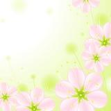 ροζ 2 λουλουδιών ανθών απεικόνιση αποθεμάτων