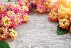 Ροζ floral στο άσπρο ξύλινο υπόβαθρο Στοκ εικόνα με δικαίωμα ελεύθερης χρήσης
