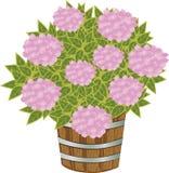 ροζ hydrangea Στοκ εικόνα με δικαίωμα ελεύθερης χρήσης