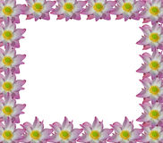 Ροζ Lotus στο απομονωμένο άσπρο υπόβαθρο Στοκ Εικόνα