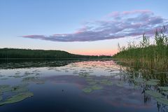 Ροζ Relfections σε μια λίμνη στοκ εικόνες