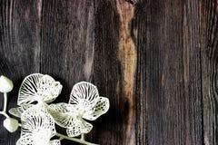 Ρομαντικά, άσπρα λουλούδια στο σκοτεινό ξύλο Στοκ Φωτογραφία