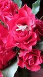 Ρομαντικά κόκκινα τριαντάφυλλα και δαχτυλίδι Στοκ εικόνες με δικαίωμα ελεύθερης χρήσης