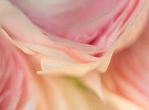 Ρομαντικά ρόδινα anemones στο υπόβαθρο κρητιδογραφιών Στοκ φωτογραφία με δικαίωμα ελεύθερης χρήσης