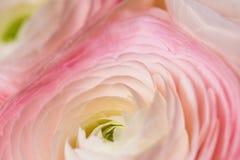 Ρομαντικά ρόδινα anemones στο υπόβαθρο κρητιδογραφιών Στοκ Φωτογραφία