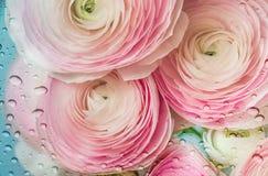 Ρομαντικά ρόδινα anemones στο υπόβαθρο κρητιδογραφιών Στοκ φωτογραφίες με δικαίωμα ελεύθερης χρήσης