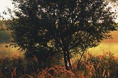 Ρομαντική ανατολή με την ομίχλη και gossamer στοκ εικόνα με δικαίωμα ελεύθερης χρήσης