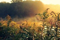 Ρομαντική ανατολή με την ομίχλη και gossamer στοκ εικόνες