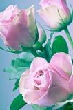 Ρομαντική ανθοδέσμη των ρόδινων τριαντάφυλλων στα εκλεκτής ποιότητας χρώματα Στοκ Φωτογραφία