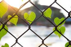 Ρομαντική μορφή δέντρων με την καρδιά που διαμορφώνεται Στοκ εικόνα με δικαίωμα ελεύθερης χρήσης