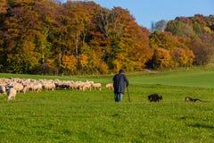 ρομαντική σκηνή τοπίων φθινοπώρου με τα πρόβατα Στοκ φωτογραφία με δικαίωμα ελεύθερης χρήσης