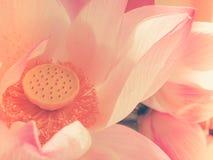 ρομαντικός άνευ ραφής ανασκόπησης Στοκ εικόνες με δικαίωμα ελεύθερης χρήσης