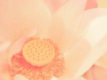 ρομαντικός άνευ ραφής ανασκόπησης Στοκ Φωτογραφίες