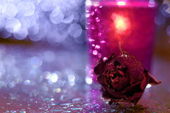 Ρομαντικός ενιαίος αυξήθηκε και ένα κερί Στοκ φωτογραφία με δικαίωμα ελεύθερης χρήσης