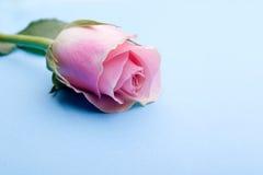 Ρομαντικός ενιαίος ρόδινος αυξήθηκε Στοκ Εικόνα