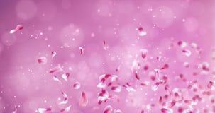 Ρομαντικός κόκκινος ρόδινος πετάγματος αυξήθηκε Placeholder πετάλων λουλουδιών Sakura μειωμένος βρόχος 4k