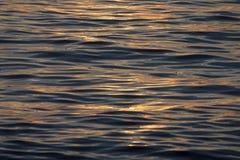 Ρομαντικό ηλιοβασίλεμα πικραλίδων στοκ εικόνες