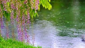 Ρομαντικό υπόβαθρο ακτών 4k λουλουδιών ποταμών άνοιξη με τις πτώσεις βροχής απόθεμα βίντεο