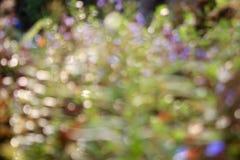 Ρομαντικό bokeh Ταπετσαρία σύστασης φύσης θαμπάδων bokeh Στοκ φωτογραφία με δικαίωμα ελεύθερης χρήσης