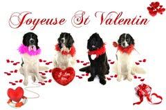 Ρομαντικό landseer valentin του ST αγάπης σκυλιών Terre neuve newfounland Στοκ Εικόνες